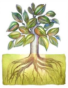 Tree Roots growing deep