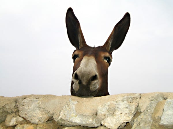 quot Balaam 39 s Talking Donkey quot Sunday School Lesson Ministry
