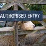 sheep-gate