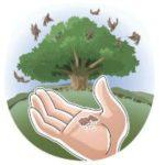 Jesus' parable of the soils Bible lesson